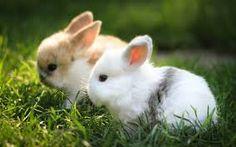 Resultado de imagen de conejos enanos