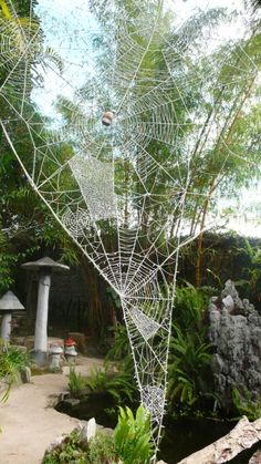 Yarn spider webs. These aren't real, but they add the beauty of the webs without the actual spiders, for those that have the fears.