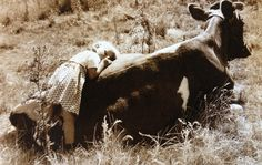 OK--I had to get the cows up at times when I was little. There was a cow who took care of me.  When I was too tired, she let me hold her tail to make it up the hill.