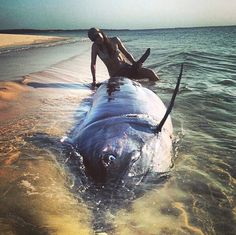 Stephanie Choate, the baddest female angler in the world landed 2 granders won the world cup and a black marlin on test. Marlin Fishing, Women Fishing, World Cup, Female, Hot, Animals, Black, Animales, Animaux