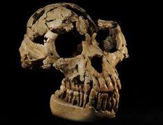 Orrorin Tugenensis Fue encontrado en Kenya, su edad. Se ...Orrorin Tugenensis Fossil