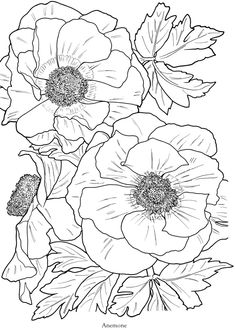 "anemone bw coloring book page *from ""in full bloom..."" a dover book"