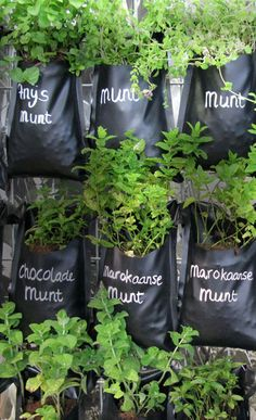 Make your own tea wall with pond-foil! A collection of al sorts of mint plants growing on your fence... great idea!