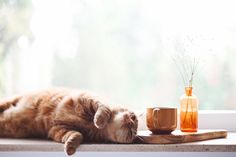 6 Great Cat-Friendly Cities Did you know that purring serves no vital purpose for your cat other than they know we like it? It's true. So, with a biological weapon like that over us, it should come as no surprise that many of us out there are completely obsessed with our feline friends. And if you count yourself as […] #Cat, #Cats, #Cute, #Funny, #Katze, #Katzen, #Katzenworld, #Kawaii, #Pets, #ねこ, #猫 #CatTravel, #Mews