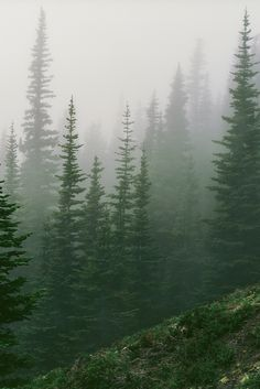 Misty forest in the Olympic Mountains, Washington by Trevor Ducken. Pine Forest, Dark Forest, Misty Forest, Conifer Forest, Evergreen Forest, Fantasy Forest, Beautiful World, Beautiful Places, Wow Photo
