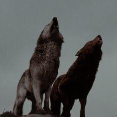 Twilight Wolf, Twilight Cast, Twilight Photos, Tribal Wolf, Queen Aesthetic, Wolf Girl, Remus Lupin, Vampire Diaries The Originals, Werewolves