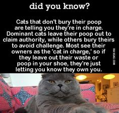 Cat Care 101 did you know? Crazy Cat Lady, Crazy Cats, I Love Cats, Cute Cats, Funny Cats, Funny Animals, Cute Animals, Animal Facts, Cat Facts