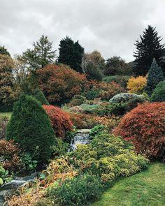 Autumn doing its thing at Kilver #autumn #kilvercourtgardens #garden #englishgarden #edwardian #sheptonmallet #october #somerset #england