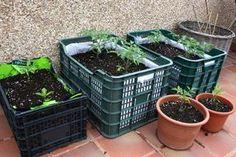 ¿Cómo hacer una huerta en casa? Algunos de los cultivos más utilizados http://www.habitamos.com.ar/ideas-creativas/como-hacer-una-huerta-organica-en-casa.html