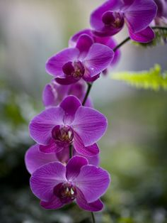 Lis...purple orchid...grown indoors, in season during your wedding