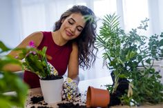 How To Refresh Potted Plants – Is Changing Potting Soil Necessary - Modern Container Plants, Container Gardening, Potted Plants, Indoor Plants, Indoor Gardening Supplies, Pots, Plant Diseases, Drought Tolerant Plants, Bright Flowers