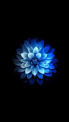 Fluorescent Blue Dahlia Wallpaper