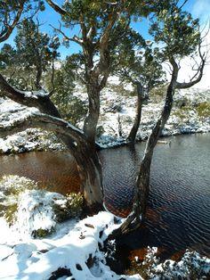 Cradle Mountain Tasmania- in Winter