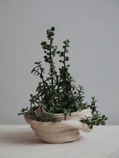 Botanic Life Extended – Ceramic Series by Taiwanese Artist Zhu Ohmu – OEN Ceramic Pottery, Ceramic Art, Art Diy, U Bahn, Ikebana, Clay Art, Houseplants, Indoor Plants, Flower Pots