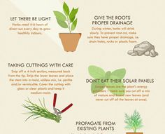 Anglian Home created a how-to infographic on successfully growing an herb garden.