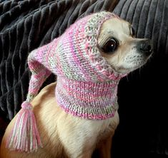 Effective Potty Training Chihuahua Consistency Is Key Ideas. Brilliant Potty Training Chihuahua Consistency Is Key Ideas. Knit Dog Sweater, Dog Sweaters, Chihuahua Love, Chihuahua Puppies, Chihuahua Clothes, I Love Dogs, Cute Dogs, Cute Dog Clothes, Dog Houses