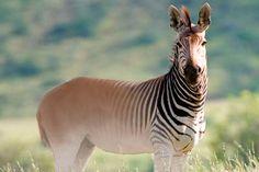animales extintos - Buscar con Google