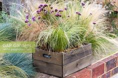 drought tolerant box planted with Verbena bonariensis 'Lollipop' and ornamental grasses Carex 'Frosted Curls', Carex comans 'Bronze Form', Stipa tenuissima and Festuca glauca. Ornamental Grass Landscape, Ornamental Grasses, Patio Plants, Garden Planters, Container Plants, Container Gardening, Stipa, Urban Gardening, Garden Design