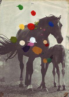 Pony -Beth Hoeckel    _
