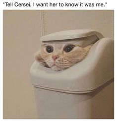 Epic Game of Thrones Scene Immortalized By Cat Memes! - World's largest collection of cat memes and other animals Cute Kittens, Cats And Kittens, Kitty Cats, Cute Funny Animals, Funny Animal Pictures, Funny Cute, Funny Photos, I Love Cats, Crazy Cats