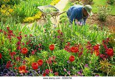 Monet s garden Giverny Haute Normandie France Europe - Stock Image