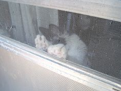 paws Home Appliances, Cats, Animals, House Appliances, Gatos, Animais, Animales, Animaux, Appliances