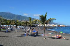 Palm Trees, Playa del Jardin, Puerto de la Cruz, Tenerife