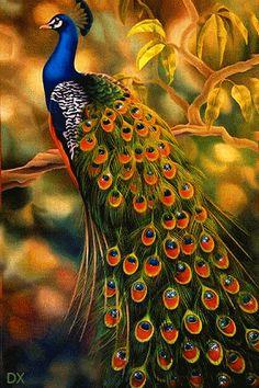 472 best Good Morning Gif photos by sonusunariya Beautiful Nature Wallpaper, Beautiful Birds, Animals Beautiful, Peacock Images, Peacock Pictures, Exotic Birds, Colorful Birds, Gif Pictures, Nature Pictures