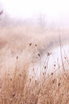 dry and foggy Landscape Photography, Nature Photography, Designers Guild, Farrow Ball, Ethereal, Mists, Serenity, Scenery, Images
