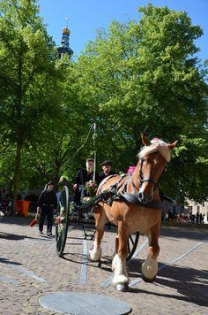 Folkloristische dag in Middelburg