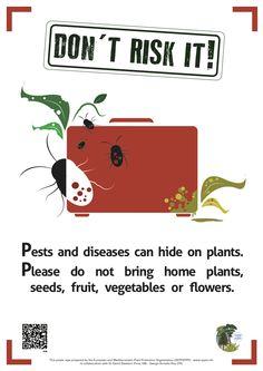 Il Poster di www.eppo.int #piante #viaggi #rischi | può essere scaricato in PDF da qui [link diretto] http://www.eppo.int/PUBLICATIONS/poster/poster&leaflet.htm