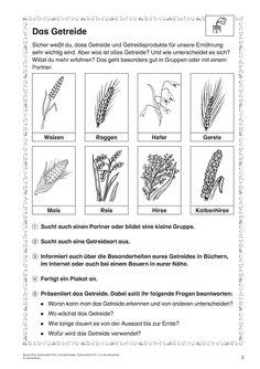 Natur und Leben · Arbeitsblätter · Grundschule · Lehrerbüro