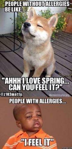 Allergies meme - http://www.jokideo.com/