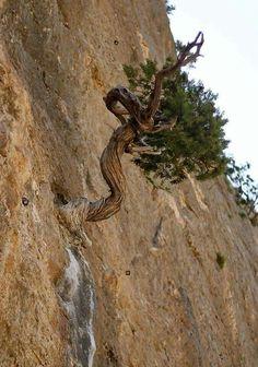 Vaya posición de este árbol
