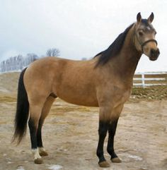 I swearrr this is my horse. It has to be because it looks WAYYY to similar! Every marking is the exact same