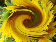 Photo by Nancy Vajaianu Sunflower Seeds, Planting Flowers, Flora, Digital Art, Abstract, Plants, Painting, Outdoor, Summary
