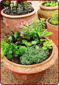 Gardening With Containers The best container gardening vegetables and herbs to grow. Some exceptional plant varieties thrive in pots. Container Herb Garden, Container Gardening Vegetables, Plant Containers, Growing Vegetables In Pots, Growing Herbs, Bucket Gardening, Gardening Tips, Gemüseanbau In Kübeln, Chicken Garden