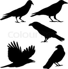 Magpie Illustrations and Clip Art. 713 Magpie royalty free illustrations and drawings available to search from thousands of stock vector EPS clipart graphic designers. Body Art Tattoos, Small Tattoos, Crow Tattoos, Phoenix Tattoos, Ear Tattoos, Crow Flying, Crow Photos, Skin Paint, Body Paint