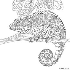 Coloring Page World Chameleon Portrait visit this site  there