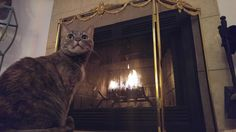 Kitty has discovered fire and she loves it.