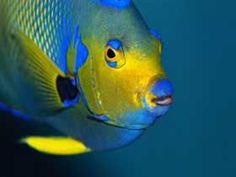 peces tropicales -