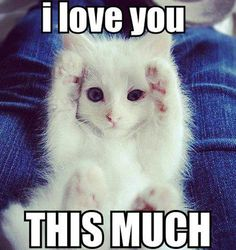 15 Signs that your kitty love you