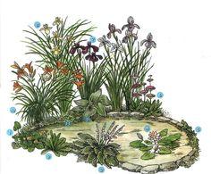 Декорирование+прудов+растениями:+учитываем+сроки+цветения,+особенности+произрастания,+цветовую+гамму