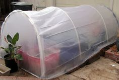 Cold Frame Greenhouse - Zone 8 for us Diy Greenhouse Plans, Cheap Greenhouse, Greenhouse Interiors, Backyard Greenhouse, Mini Greenhouse, Greenhouse Wedding, Portable Greenhouse, Pallet Greenhouse, Homemade Greenhouse