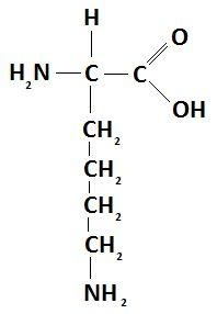 Lisina - Aminoácido