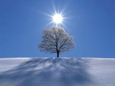 Sun shining in blue sky over tree in winter snow.