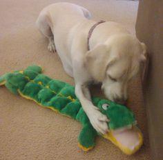 Kyjen Plush Squeaker Mat 31″ Long Gator Dog Toy {16 Squeakers}