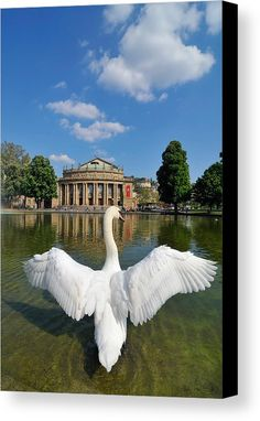 Swan and Opera building Canvas Print for sale. Beautiful white swan spreading wings in front of the Staatstheater (Theater and Opera building) Stuttgart, Germany. Perfect Schwanensee, Swan Lake symbol. The image gets printed on one of our premium canvases and then stretched on a wooden frame, click through and check out your options. 30 days money back guarantee. Matthias Hauser - Art for your Home Decor and Interior Design.
