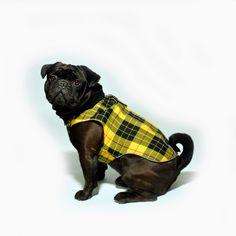 www.chezvalde.com   Jumpin Jaxx - Highland Dreams French Bulldog, Dreams, Dogs, Clothing, Animals, Outfits, Animales, Animaux, French Bulldog Shedding