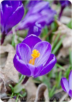 Noch mehr Garten – März